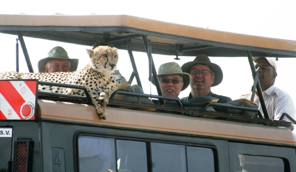 Cheetah sits in jeep