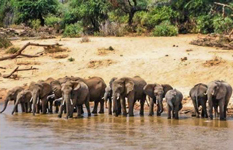 Kenya Photographic Safari By As You Like It Safaris
